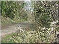 NT1683 : Fife Coastal Path by M J Richardson