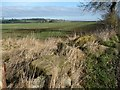 NZ1411 : Farmland on the north side of Greenless Lane by Christine Johnstone