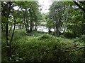 NH3634 : River Glass by Richard Webb