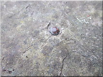SH5873 : Possible rivet benchmark (close-up) in Garth gardens, Bangor by Meirion