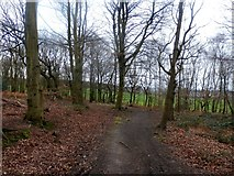 SE4208 : The Barnsley Boundary Walk in West Haigh Wood by Jonathan Clitheroe