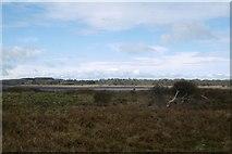 NT6378 : Links by Hedderwick Hill by Richard Webb