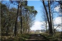 NT6378 : West Links / Hedderwick Hill by Richard Webb