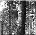 TM0188 : A bottle tree by Evelyn Simak
