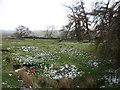 NY4228 : On Greystoke Moor by David Purchase
