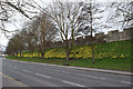 SE6051 : Daffodil time on York city walls by Keith Edkins