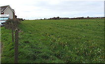 SS8178 : Field on the north side of Long Acre Drive, Nottage, Porthcawl by Jaggery