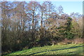 TQ5940 : Roundabout Wood by N Chadwick