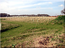 TG2219 : View across the Bluebell Wood burial park by Evelyn Simak