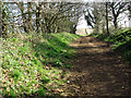 TG1615 : View along the Marriott's Way long distance footpath by Evelyn Simak