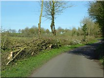 SO8836 : Laid hedge by Philip Halling