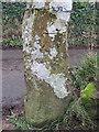 SH3231 : Stone gatepost and bench mark west of Tan yr Allt, Llanbedrog by John S Turner