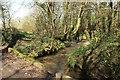 SX1653 : Stream near Lanlawren by Derek Harper