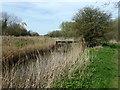 TQ7709 : Footbridge across Combe Haven by PAUL FARMER