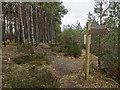 NH5044 : Footpath signpost in Wester Balblair Wood by valenta