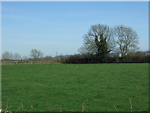 SK1919 : Grazing off Dunstall Road by JThomas