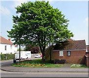 ST3050 : May foliage on a Burnham-on-Sea corner by Jaggery