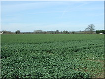 SK1515 : Crop field, Overley by JThomas