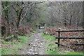 ST2393 : Stony footpath, Cwmcarn Forest by M J Roscoe