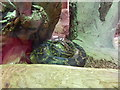 TL9521 : Python at Colchester Zoo by Hamish Griffin