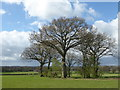 TQ4546 : Clump of trees on the way to Edenbridge by Marathon