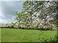 TQ4446 : Hawthorn hedgerow near Edenbridge by Marathon