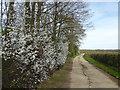 TQ4447 : Track to Swan Lane Farm by Marathon
