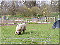 SJ9303 : Pig Field by Gordon Griffiths