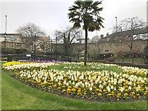 SJ8545 : Grosvenor Gardens, Newcastle-under-Lyme by Jonathan Hutchins