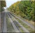 TL4363 : Cambridgeshire Guided Busway by N Chadwick