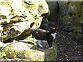 TQ5639 : Cat on an outcrop of sandstone on Rusthall Common by Marathon