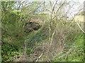ST0311 : Overgrown railway cutting, Willand by David Smith