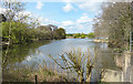 SU8567 : Mill Pond, Bracknell by Des Blenkinsopp