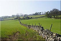 SD7186 : Field boundary below Cage Farm by Bill Boaden