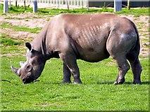 SE6301 : Rhinoceros at Yorkshire Wildlife Park by Graham Hogg