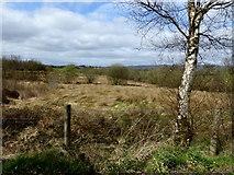 H5071 : Heathland, Recarson by Kenneth  Allen