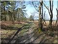TQ3933 : Approaching open heathland on Ashdown Forest by Marathon