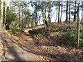 TQ4133 : Sunken path on Ashdown Forest by Marathon
