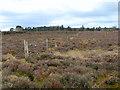 NH7445 : Culloden Battlefield by David Dixon