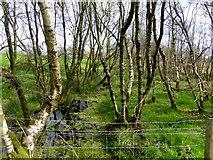 H5172 : Swampy ground, Cloghfin by Kenneth  Allen
