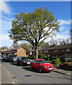 ST3094 : Tree and cars, Beaumaris Way, Llanyravon, Cwmbran by Jaggery