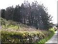 SJ0550 : Fir trees near Llyn Derwen Fishery by Eirian Evans