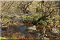 SX6675 : Island, East Dart River by Derek Harper
