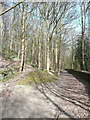 SE1322 : Cromwell Wood Lane and a path to Delf Hill, Southowram by Humphrey Bolton