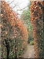 SJ7481 : The maze in Tatton Park  by Stephen Craven