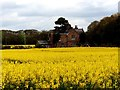 SD3201 : Sunnyfield cottage and field of rapeseed by Norman Caesar