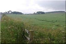 NU1425 : Oats, Wandylaw by Richard Webb