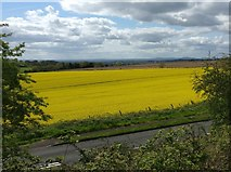 SO9969 : Farmland viewed from the A448 Bromsgrove Highway by Mat Fascione