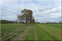 SE6648 : Bridleway to Gipsey Corner by DS Pugh