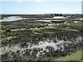 SZ8797 : Pagham Harbour from Pagham Wall by Rob Farrow